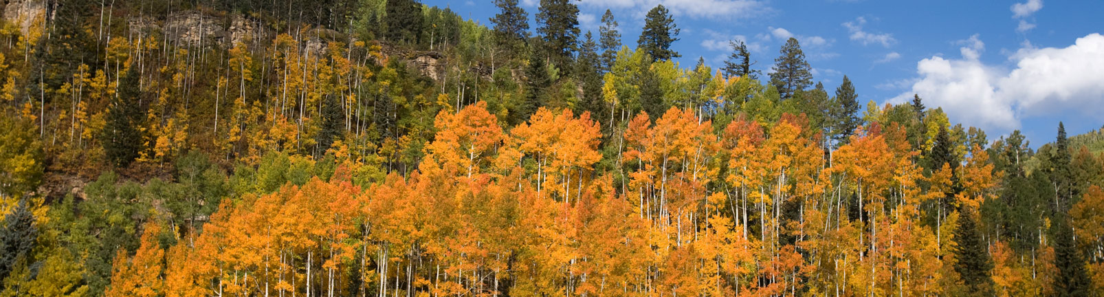 southwest colorado aspens